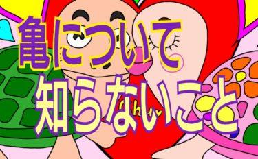 5月23日世界亀の日&キスの日★亀に関するプチ雑学★可愛いイラスト