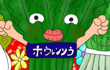 ほうれん草・小松菜・チンゲン菜の違いって何?★1日1つ賢くなるプチ雑学